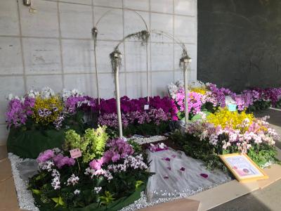 「花」現幸福 綻放校園 長榮大學蘭花學程辦蘭展 推廣蘭花產業