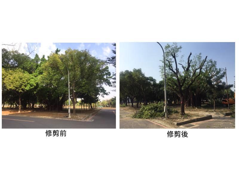 強化校園安全   長榮大學進行路樹修剪