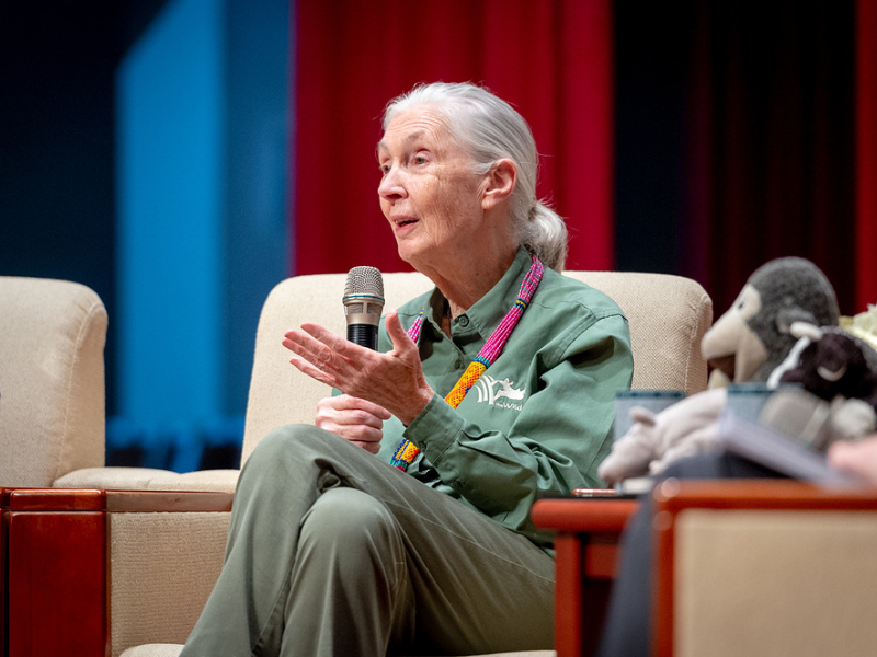 Jane Goodall, the Winner of the 2021 Templeton Prize for Her Work on Animal Intelligence and Humanity